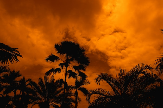 Silhouette ancient tall palm tree orange night sky