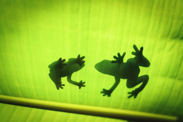 The silhouette of the animal on the leaf.