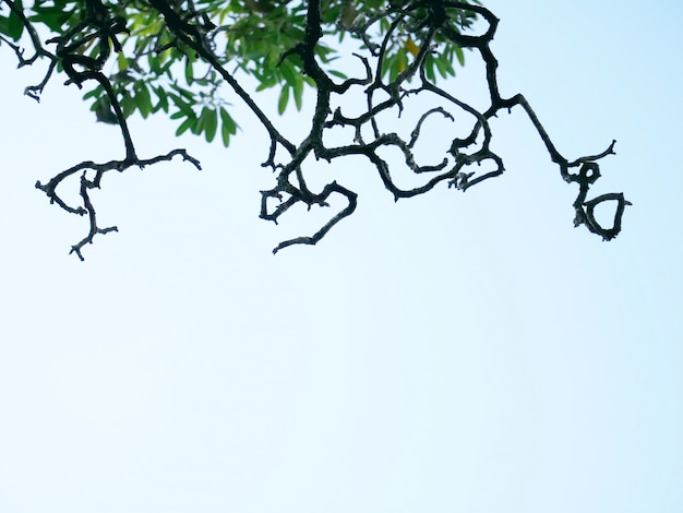 Silhouette of bare tree branches and green leaves