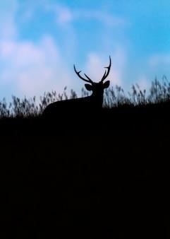 Silhouette of barking deer among grass field