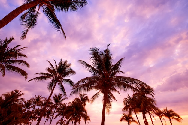 Silhouette of beach during sunset twilight. seascape of summer beach and palm tree at sunset.