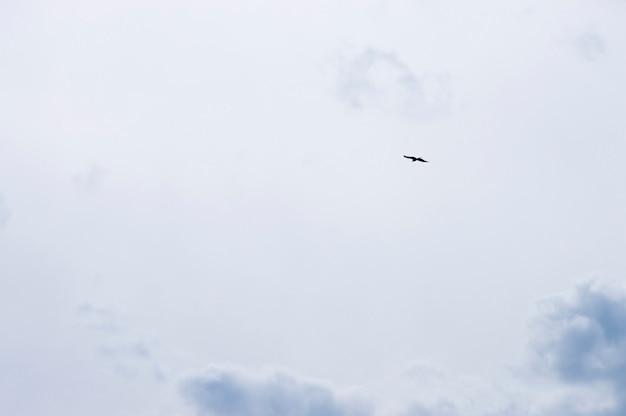 Silhouette bird on sky