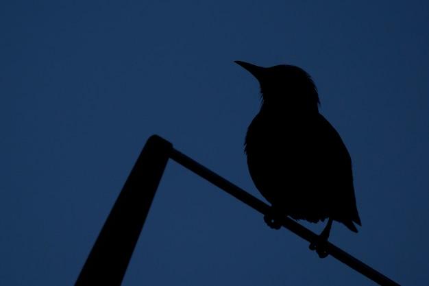 Silhouette of a bird over the sky