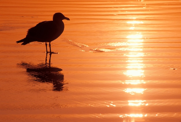 Silhouette of bird standing in shallow water