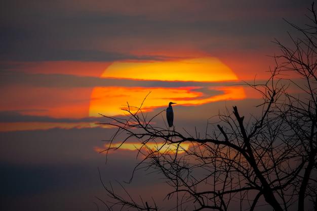 Silhouette birds on dead tree branch