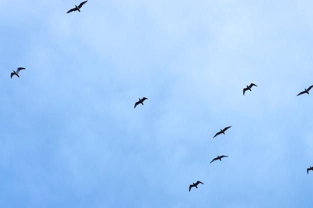 Silhouette birds on sky background