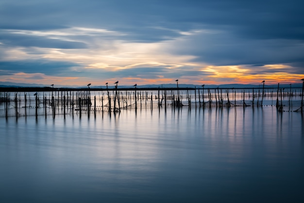 Silhouette of birds standing on poles at dusk in the albufera in valencia. long exposure.