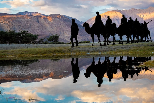 Silhouette camel rides with water reflection at nubra valley in leh ladakh, jammu and kashmir, india.