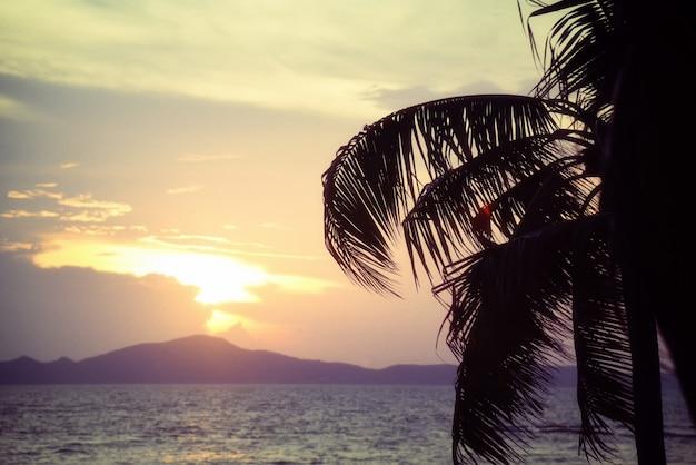 Silhouette coconut palm tree sunset ocean on the tropical beach sea summer orange sky and islands mountain