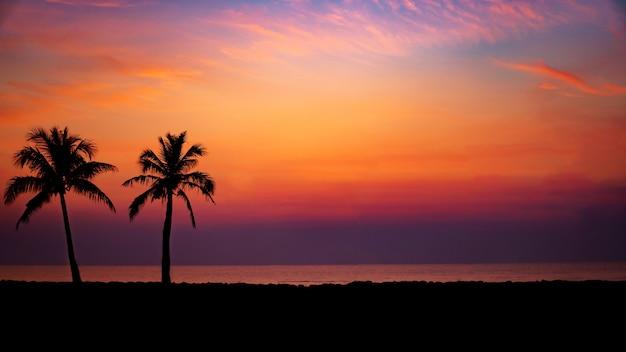 해질녘 해변에서 실루엣 코코넛 야자수
