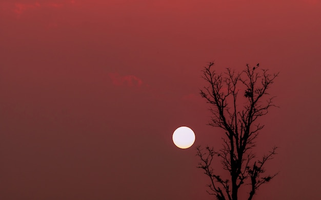 Silhouette of couple birds on top of leafless tree at sunset
