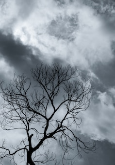 Silhouette dead tree and branch on grey sky