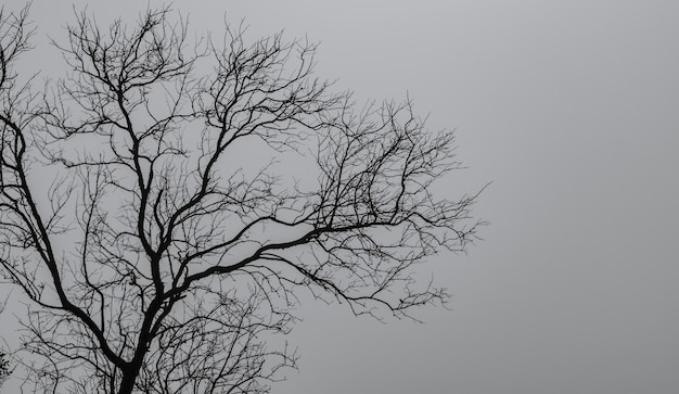 Silhouette dead tree on dark dramatic sky and white clouds background for a peaceful death. despair and hopeless concept. sad of nature. death and sad emotion background. dead branch unique pattern.