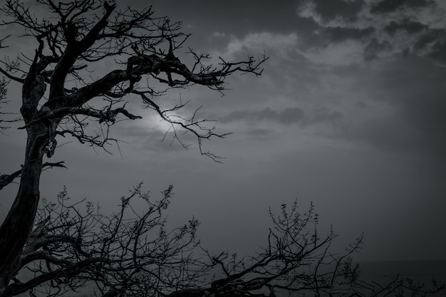 Silhouette dead tree on dark dramatic sky and white clouds for death and peace. halloween day . despair and hopeless concept. sad of nature. death and sad emotion