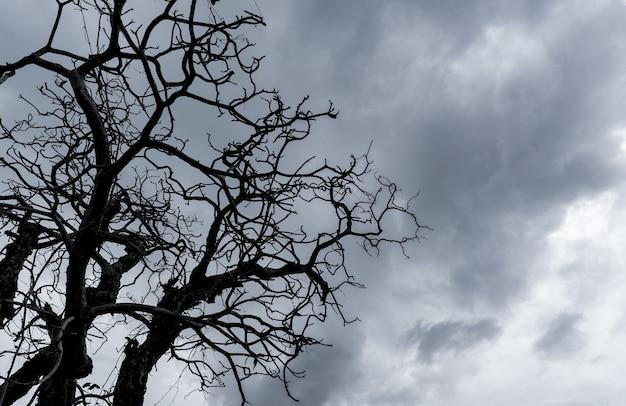 Silhouette dead tree on dark dramatic sky.