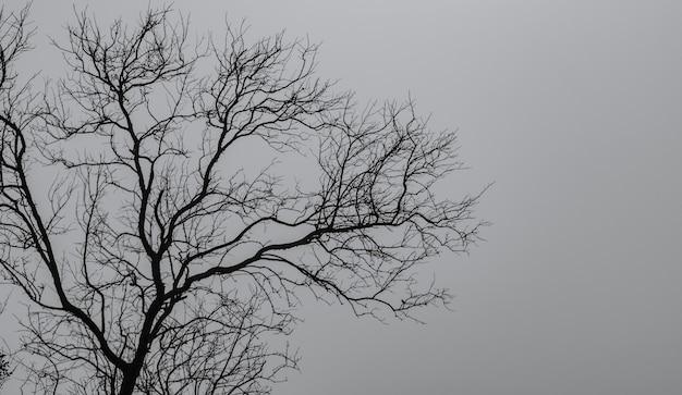平和な死のための暗い劇的な空と白い雲の背景にシルエット枯れ木。絶望と絶望的な概念。自然の悲しい。死と悲しい感情の背景。枯れ枝独特のパターン。