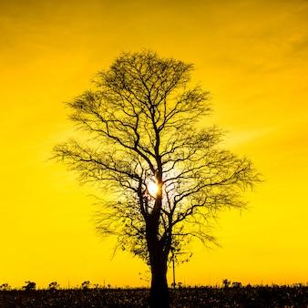 Силуэт мертвого дерева на закате небо