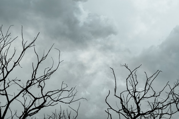 Silhouette of dead trees on dark dramatic sky and gray clouds