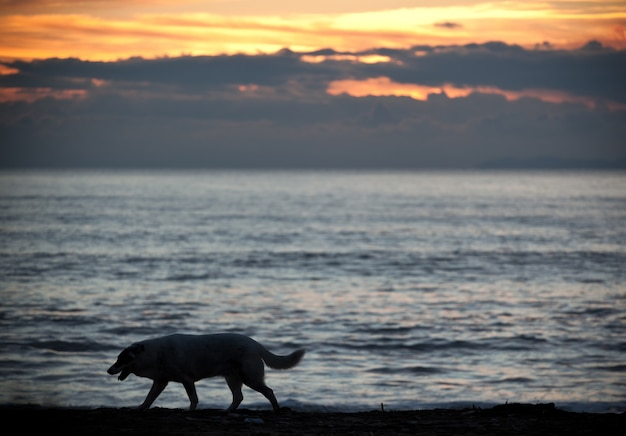 Silhouette of a dog at beach during beautiful sunset.