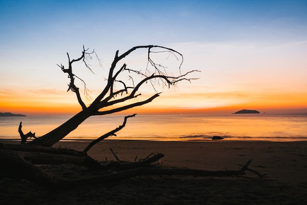 Silhouette of dry tree on the beach at sunset.