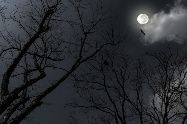 Silhouette of dry tree in the night with full moon in the darkness sky.