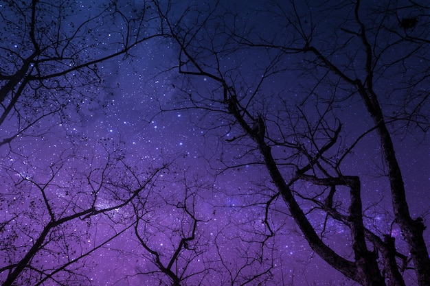 Silhouette of dry tree in the night with starry sky