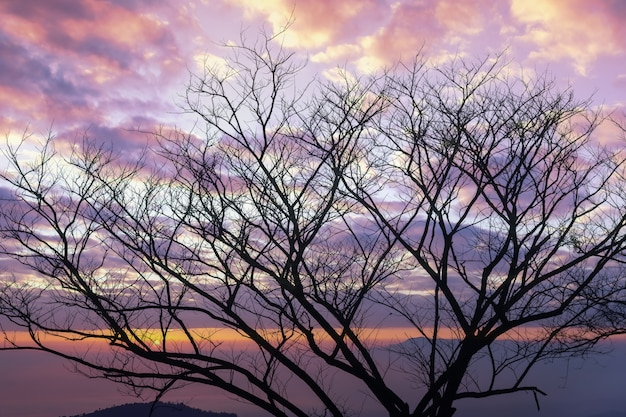 Silhouette of dry tree with sunrise through the cloudy sky.
