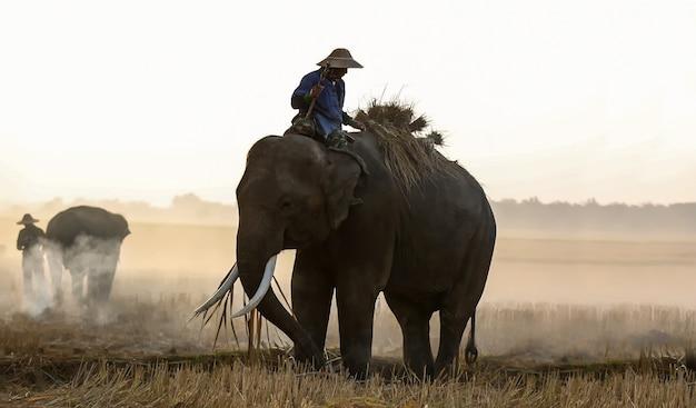 スリンタイのsunsetelephantタイの背景にシルエット象