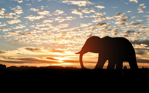 Silhouette of elephant on top of a mountain at sunset