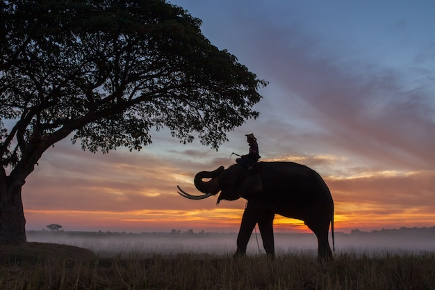 Silhouette of elephants in thailand during sunrise time
