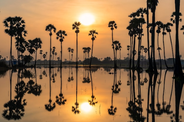 タイ、パトゥムターニー県、ドンタンサムコックの日の出の池に自然に映るシルエットの農家の小屋と砂糖椰子の木の農場。有名な旅行先と写真の視点