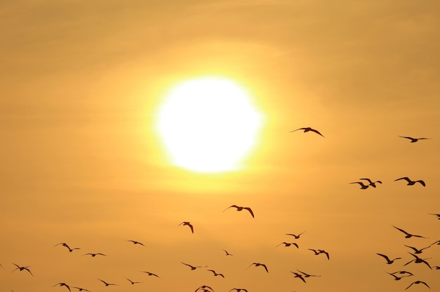 Silhouette of flock of flying birds against golden sky with the dazzling sun