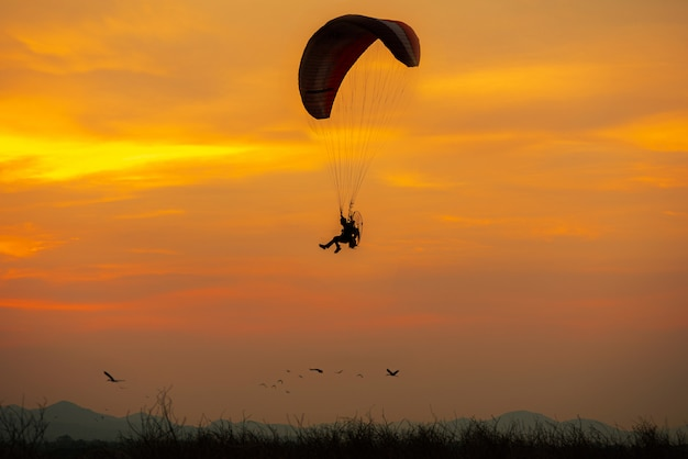 Silhouette flying birds and paramotor  sunset sky