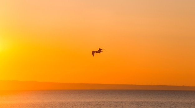 Silhouette of a flying seagull over sunrise sea landscape.