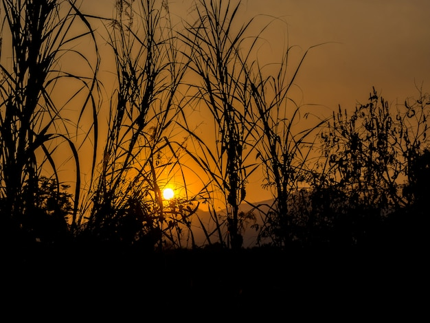 Silhouette of grass flower against the sun in evening