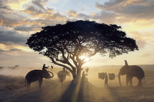 農家のシルエットグループが象と田んぼで収穫されています