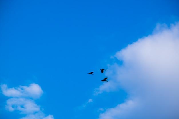 The silhouette of hornbill on the blue sky