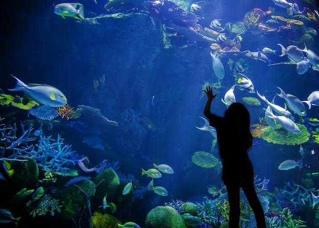 Silhouette kid look up on underwater aquarium