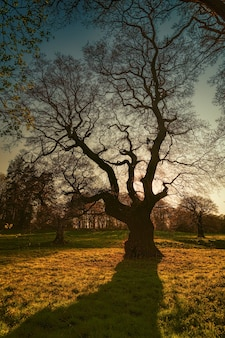Silhouette of leafless tree during golden hour