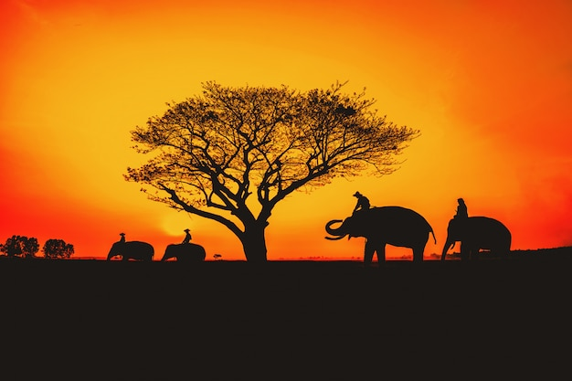 Silhouette, lifestyle of people and elephants.