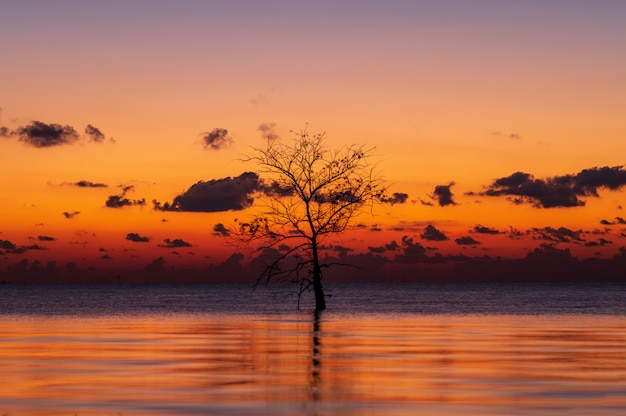 Silhouette of lonely mangrove tree in lake with twilight light in morning at pakpra, phatthalung, thailand