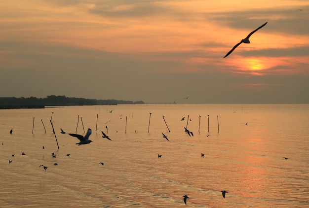 Silhouette of many seagulls flying over the sea at dawn, gulf of thailand