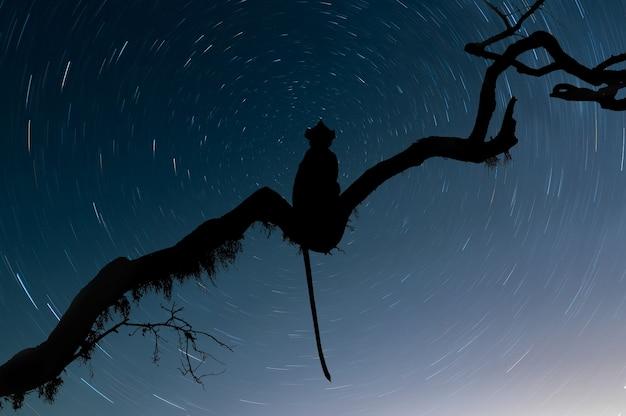 Силуэт обезьяны на ветке среди звезд