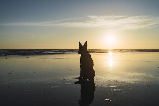 석양에 바다 해안선에 앉아 큰 강아지의 실루엣