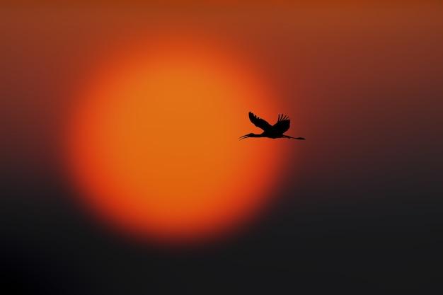 Силуэт птицы, летящей в небе с красивым пейзажем заката на размытой поверхности
