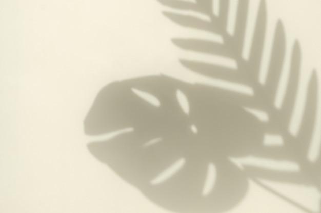 밝은 노란색 배경과 복사 공간에 햇빛으로부터 야자수 가지 곡선의 흐릿한 그림자와 몬스테라 잎의 실루엣입니다. 최소한의 트렌드 컨셉입니다.