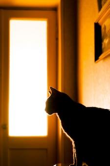 Силуэт кошки перед стеклянной дверью