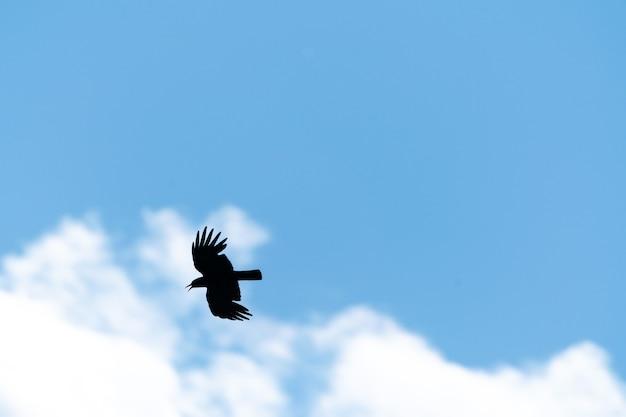 青い空を飛んでいる鳥のシルエット