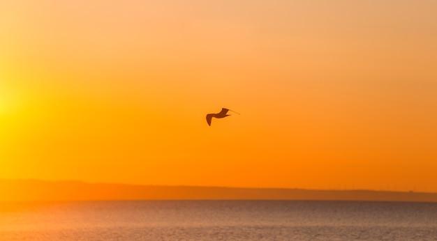 日の出の海の風景の上を飛んでいるカモメのシルエット。