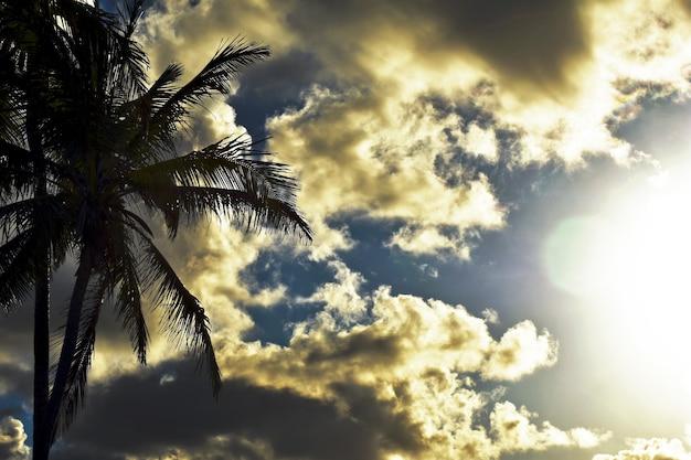 日没時のヤシの木のシルエット